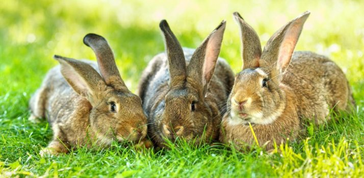 Safe Use of Aluminium Phosphide : Rabbit and Mole Control Including Level 2 Qualification